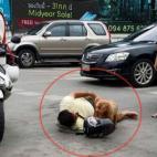 Cảm động chú chó không rời chủ nửa bước khi bị tai nạn