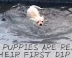 Cún đi bơi giải nhiệt ngày hè oi bức