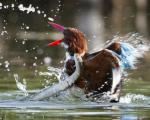 Khoảnh khắc chim bói cá chiến đấu với rắn giành sự sống