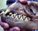 Những loài động vật có hình dáng kinh dị và vô cùng tàn bạo