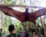Choáng với những con vật khổng lồ trên thế giới