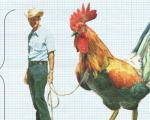 Nghiên cứu: Con người chỉ nên to bằng... con gà trong tương lai
