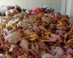 Cách phân biệt gà ta - gà thải Trung Quốc bằng mắt thường