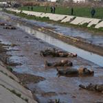 Hơn 80 thi thể nổi trên sông ở Aleppo