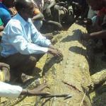 Giết cá sấu khổng lồ trong vòng 90 phút để báo thù cho vợ