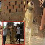 Phẫn nộ 3 thanh niên treo cổ chú chó lên cây, chụp ảnh đăng Facebook