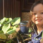 Bé Tôm nhà Hồng Nhung thích thú thu hoạch dưa chuột tự trồng