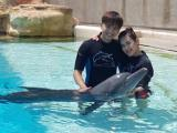 Vợ chồng Văn Anh và Tú Vi thích thú chơi đùa với cá heo
