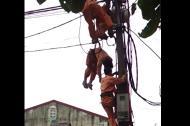 Cảm thương anh thợ điện chết vì điện giật