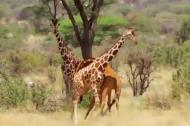Ngây ngất với vẻ đẹp thiên nhiên hoang dã ở châu Phi