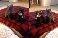 Khi mèo phiêu theo nhạc