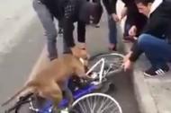 Chú chó 'phát cuồng' vì... lốp xe đạp