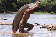 Những con cá khổng lồ ở Amazon