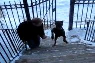Chó leo bậc cầu thang bằng 2 chân cực đỉnh