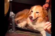 Ngộ nghĩnh chú chó 'chơi nhạc' rất chuyên nghiệp