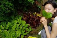 Vườn rau sạch trong biệt thự triệu đô của vợ chồng Bae Yong Joon
