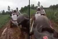 Đám cưới mùa mưa bão: Chú rể dùng xe trâu rước nàng về dinh