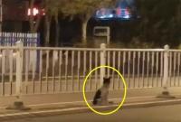 Chủ nhân qua đời, chú chó ra đường ngồi đợi suốt 80 ngày liền