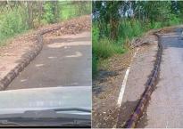 'Sốc' khi nhìn thấy con trăn khổng lồ bên lề đường, lái xe tới gần thì bật cười trước sự thật