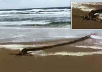 'Thủy quái' bí ẩn trôi dạt vào bờ biển Hà Lan gây xôn xao
