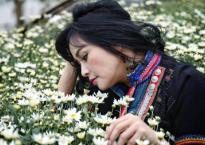 Diva Thanh Lam đẹp mơ màng giữa vườn hoa cúc họa mi