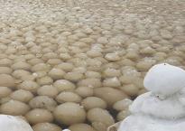 Hàng nghìn quả cầu băng trôi dạt vào bờ biển Nga và nguyên nhân 'khủng khiếp' phía sau
