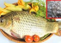 Khi làm sạch cá tuyệt đối đừng bỏ vảy đi, đó là bảo bối trường thọ, làm đẹp nên đừng lãng phí