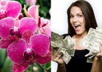 Trong nhà cứ bày 1 trong 5 loại hoa này, nghèo đến mấy cũng giàu lên nhanh chóng