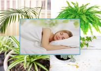 10 loại cây cảnh lọc chất độc trong phòng ngủ, tốt cho sức khỏe đã được khoa học chứng minh