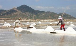 Giá 30kg muối chưa bằng một tô phở