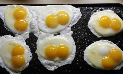 Đàn gà kỳ lạ đẻ ra nhiều trứng lòng đôi