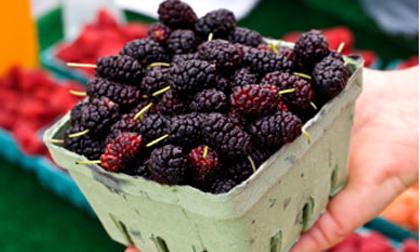 Top 8 loại quả quen thuộc là thần dược cho sức khỏe
