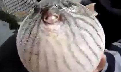 Con cá hình dáng lạ