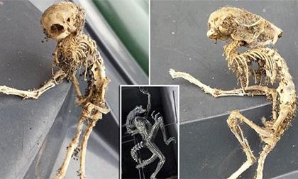 Phát hiện bộ xương giống sinh vật ngoài hành tinh