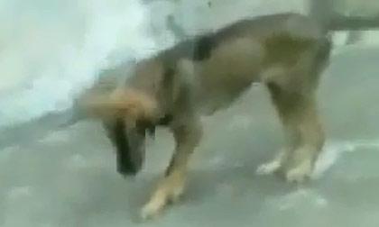 Cún cưng cũng mê mẩn nhạc sàn
