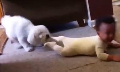 Khoảnh khắc hài hước của bé yêu và cún