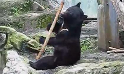 Kungfu Panda phiên bản đời thực