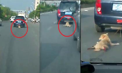 Phẫn nộ với cảnh chú chó bị kéo lê trên đường phố Trung Quốc