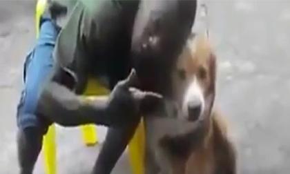 Hôn chó và cái kết bất ngờ
