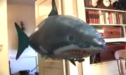 Cá mập biết bay
