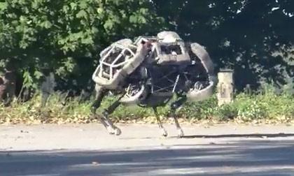 Chú chó robot cực độc