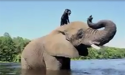 Chú chó đùa giỡn cùng voi khổng lồ