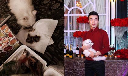 Những bức ảnh khiến Kenny Sang 'cứng họng