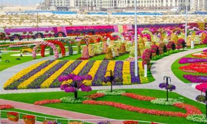 Tới thăm vườn hoa lớn nhất thế giới tại Dubai