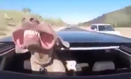 Hài hước với cách khoe răng của cún