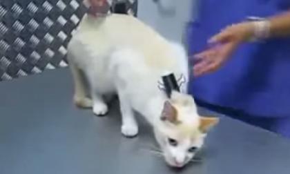 Cách 'đóng băng' một con mèo