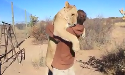 Tình bạn giữa sư tử và người