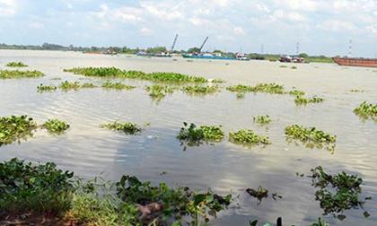 Thi thể bé gái 3 tuổi đang phân huỷ trên sông Sài Gòn