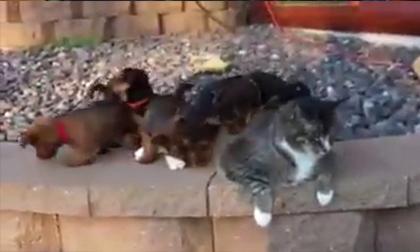 Khi bầy cún con nhầm lẫn