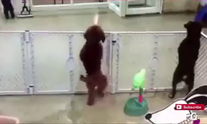 Khi cún em 'say' nhạc